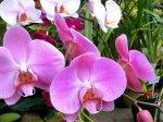 orchid_1.jpg